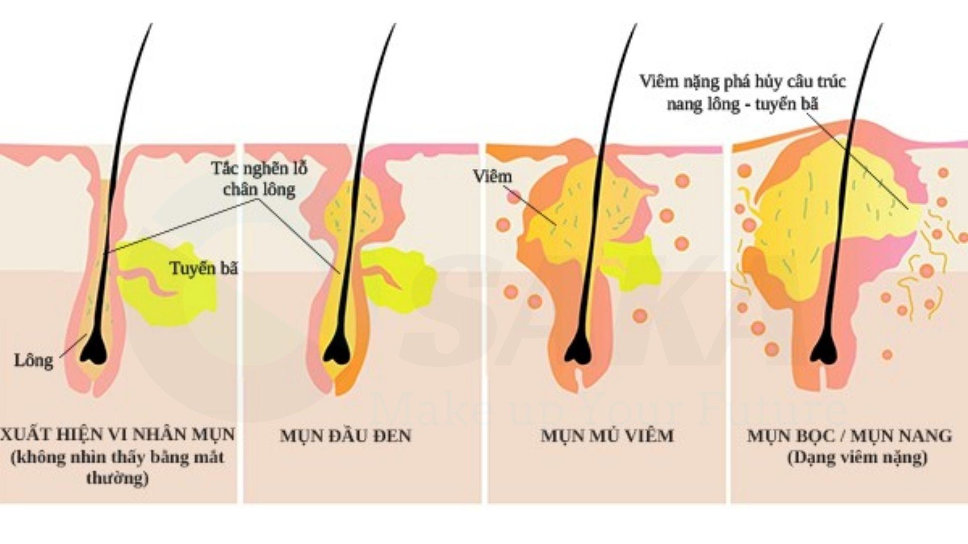 Quy trình phát triển lông