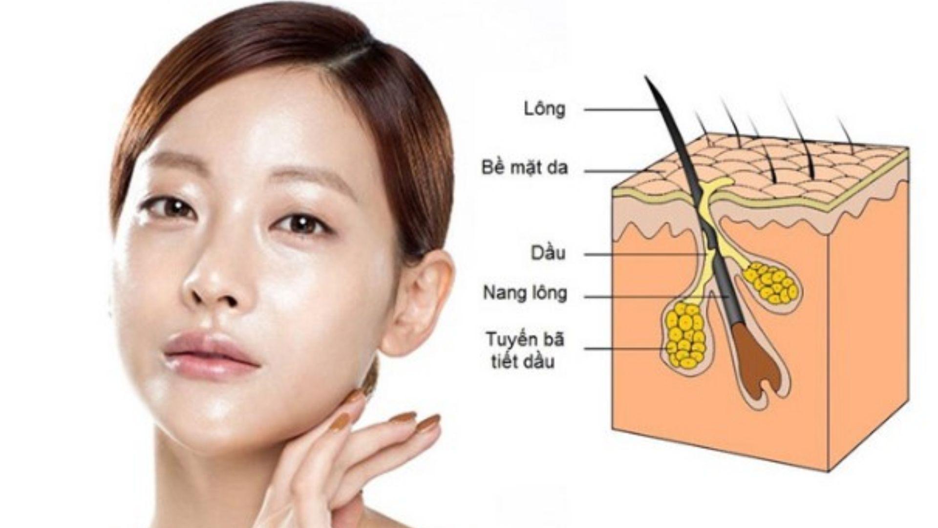 Cơ chế triệt lông mặt